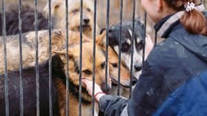 Animal Cruelty What you can do- You can volunteer at an animal shelter